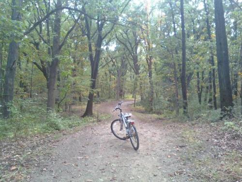 Biking in the Forest Preserves