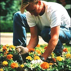 cok-gardener